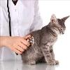 Ветеринарные клиники в Земетчино